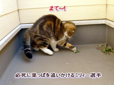 葉っぱ11.jpg