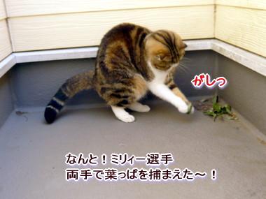 葉っぱ12.jpg