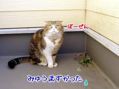 葉っぱ15.jpg