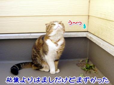 葉っぱ16.jpg